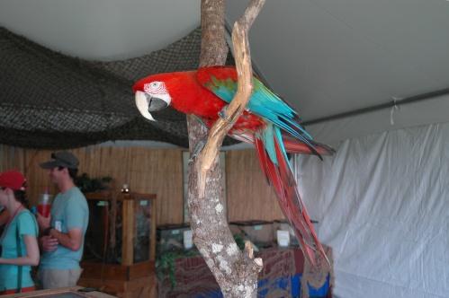 parrot082313a