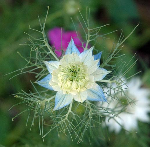 flowersnowflake