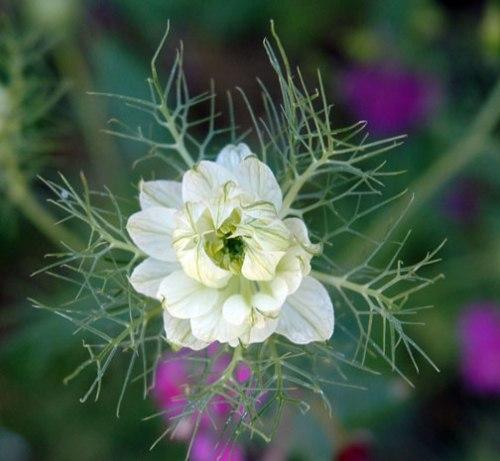 flowersnowflake2