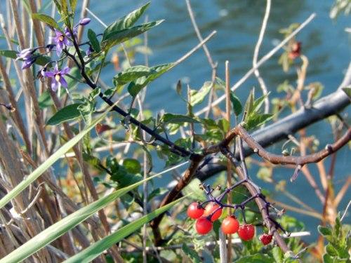 parkflowerberry