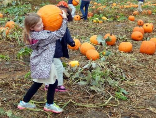 pumpkincarry
