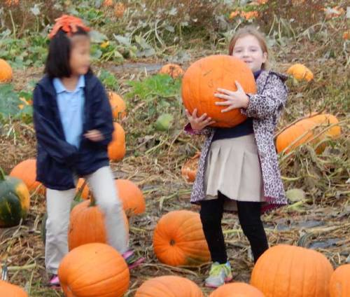 pumpkinhold