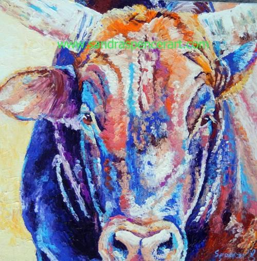 bull12x12
