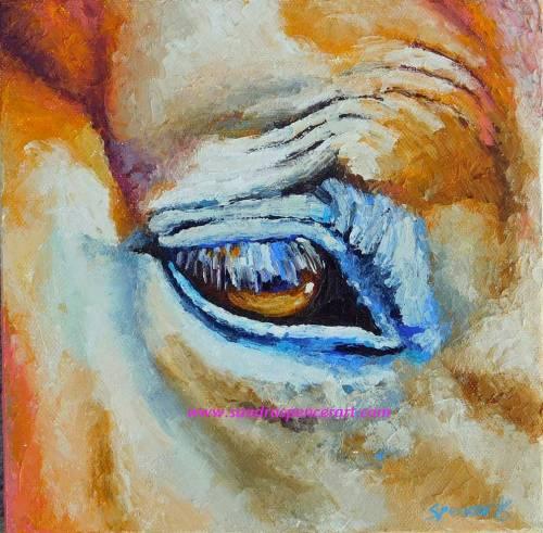 horseeye8x8