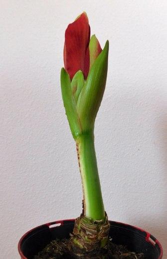 flowerstem